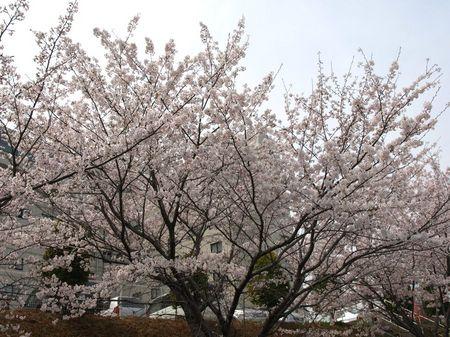 080406_shikoku006.jpg